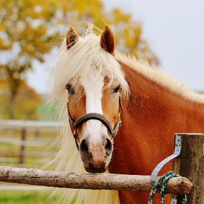 Formation management avec les chevaux