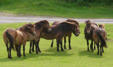 Groupe de chevaux - Manage'Horse